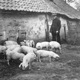 003-Boer met varkens