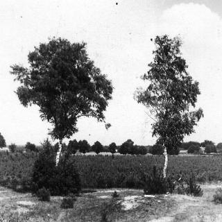 025-'t Zand in Bakel in vroegere jaren.
