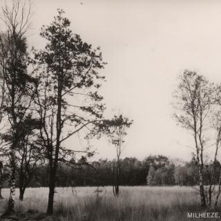 032-Natuurreservaat in het Milheeze van weleer.