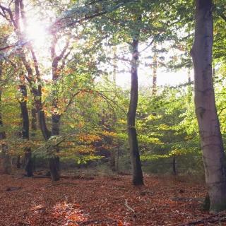 033-De Stippelberg in Milheeze, een mooi stukje natuur.