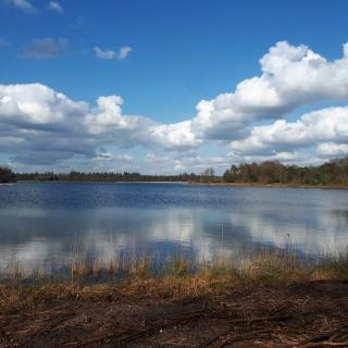 035-De Bakelse Plassen in Milheeze. Na jaren van zandwinning en grondverzet is een gedeelte van de oevers al veranderd in een mooi overgangsgebied tussen water en bos.